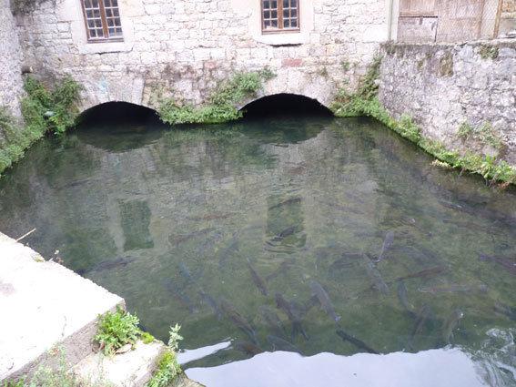 gourjan-moulin-truites