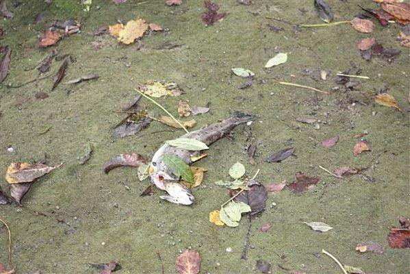 poissons-morts-cascade-5nov1
