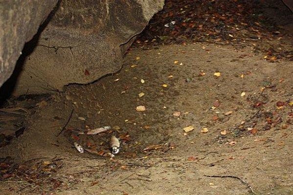 poissons-morts-cascade-5nov2